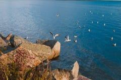 Gulls on the run Stock Photography