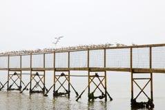 Gulls in the sea 2 Stock Photo