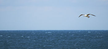 Gulls and sea Royalty Free Stock Photography