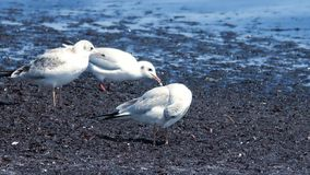 Gulls at the sea stock video footage