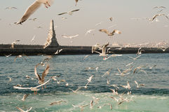 Gulls on Sea - Istanbul. A horizontal scene, which is very specific to Istanbul - Turkey. Gulls always fly on the sea to catch some sesame seed, thrown from the royalty free stock photography
