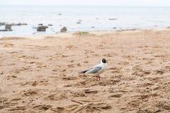 Gulls on the sea sandy beach Stock Image