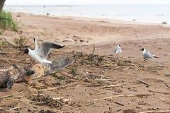 Gulls on the sea sandy beach Stock Photo