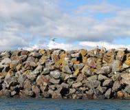 Gulls on the sea wall Royalty Free Stock Photo