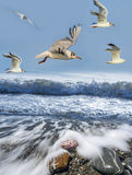 Gulls. Sea wave on a beach and gulls Royalty Free Stock Photo