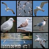 Gulls and seagulls. Eight frames sceneries of gulls and seagulls Stock Photo