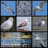 Gulls and seagulls Stock Photo