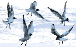 Free Gulls, Seagulls, Birds Flying On Sea Water Background, Vector Illustration Drawing Stock Photos - 151590283