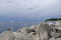Gulls. Or sea are seabirds of the family Laridae in the sub-order Lari. Photo is taken in Rovinj, Croatia Royalty Free Stock Image