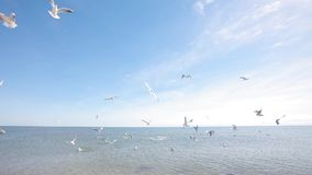 Gulls on the seashore, feeding the seagulls on the shore, seascape stock video