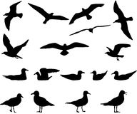 Gulls silhouette. Silhouettes of gulls flying and floating on water Stock Photos