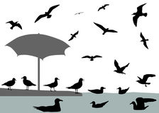 Gulls. Silhouettes of gulls flying and floating on water Stock Photography