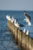 Gulls sitting on the breakwater Stock Image