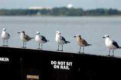 Gulls sitting on a rail Stock Photography