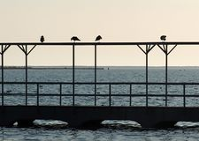 Gulls Sitting On Railing Ilha De Culatra Portugal Royalty Free Stock Photos
