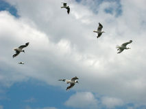 Gulls in the sky. Under the sea Stock Images