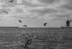 Gulls in the sky Stock Photo
