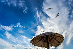 Gulls in the sky Royalty Free Stock Photography