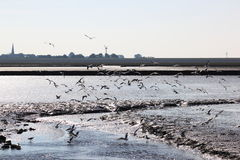 Gulls in sparkling water of dutch Waddenzee near Holwerd stock images