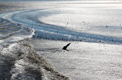 Gulls in sparkling water of Waddenzee, Netherlands Stock Images