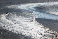 Gulls in sparkling water of Waddenzee, the Netherlands Stock Photos
