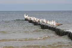 Gulls standing in a row on the poles of the breakwater stock image