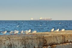 Gulls on a stone moorage Stock Photography