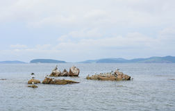 Gulls sunbathing on rocks Royalty Free Stock Image