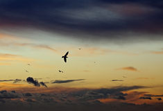 Gulls at Sunset Stock Images