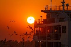 Gulls at sunset accompany the ship Royalty Free Stock Photography
