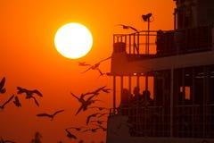 Gulls at sunset accompany the ship Royalty Free Stock Photos