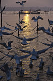 Gulls at sunset, Sangam, Allahabad, India Stock Photos