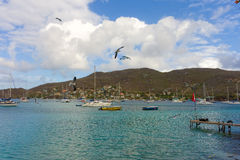 Gulls swooping over an anchorage in the windward islands Stock Photos
