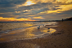 Gulls. Walk on the water. Sea and sand at sunset Stock Image