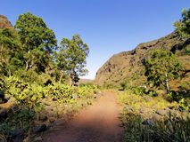 Gully on Gran Canaria Stock Photography