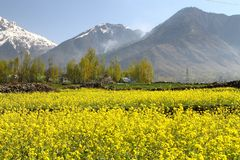 Gulmarg, Srinagar, Inde : Beau paysage avec la montagne de neige images stock