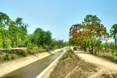 Gulmohar tree by the canal Stock Images