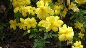 Gulna blommor