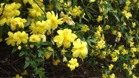 Gulna blommor stock video