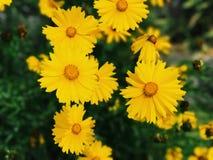 Gulna blommor arkivbild
