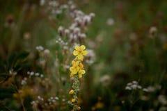 Gulna blommor Att blomma fjädrar Andedräkt av våren fotografering för bildbyråer