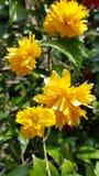 Gulna blommor royaltyfria bilder