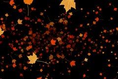Gulna, bryna, röda färgrika sidahöstfärger som flyger på svart bakgrund, bladnedgångsäsong Arkivbilder