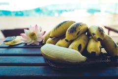 Gulna den kultiverade bananen, rå organisk guling behandla som ett barn bananer i ett B Arkivfoton