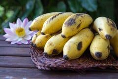 Gulna den kultiverade bananen, rå organisk guling behandla som ett barn bananer i ett B Arkivbild