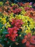 Gulna, göra grön, apelsinen, purpurfärgade härliga blommor, rött royaltyfri foto