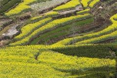 gulna, göra grön och jorda en kontakt, sammansättningen av bilden Royaltyfri Foto