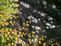 Gulna och göra grön bladinyellow och göra grön bladet i vatten med bakgrund för abstrakt begrepp för bokehsolljus royaltyfri bild