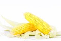 Gult öra av majs på majskolvkärnor eller korn av mogen havre på vita den isolerade bakgrundsgrönsaken Arkivbilder
