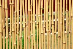 Gult bambustaket Arkivbilder